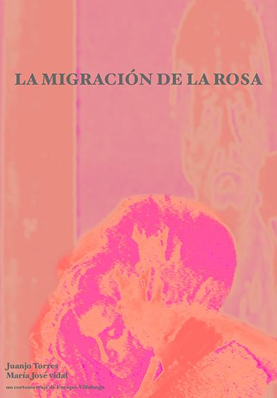 La migración de la rosa cartel
